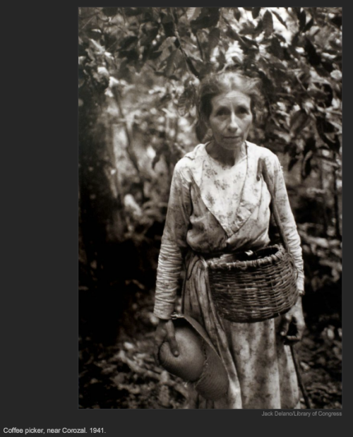 Coffee picker, near Corozal. 1941, Jack Delano