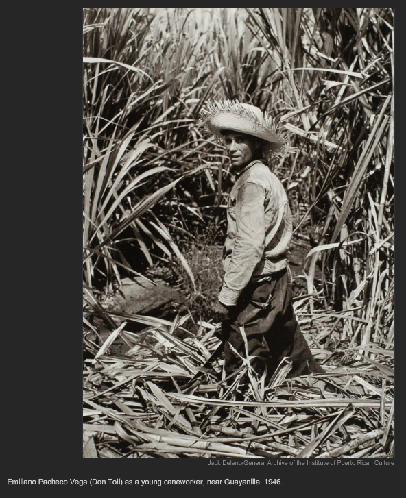 Emiliano Pacheco Vega (Don Toli) as young caneworker, near Guayanilla. 1946, Jack Delano