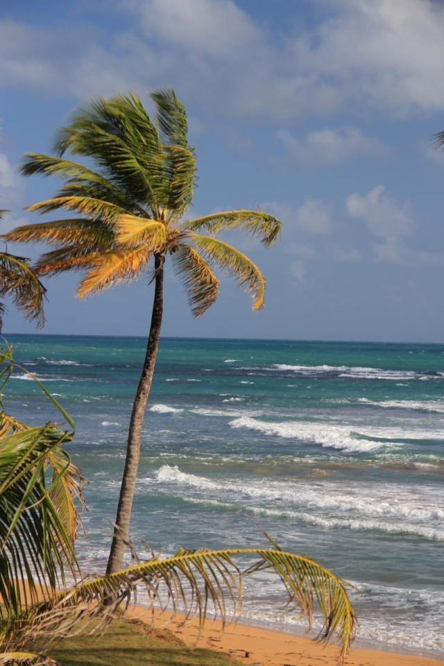 Puerto-Rico-7724